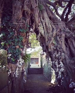五島列島のひっそりと佇む神社の写真・画像素材[2294878]