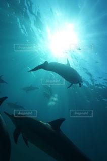 イルカの写真・画像素材[2295133]