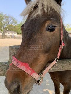 犬の隣に立つ茶色の馬のクローズアップの写真・画像素材[2297213]