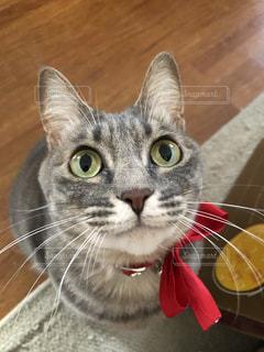 猫のクローズアップの写真・画像素材[2299650]