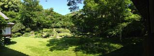 緑豊かな森のクローズアップの写真・画像素材[2295324]