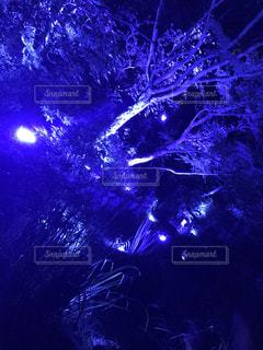 光のクローズアップの写真・画像素材[2296580]