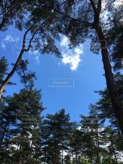 青空の写真・画像素材[113999]