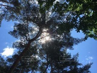 木漏れ日の写真・画像素材[114011]