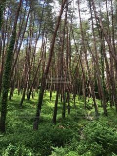 林の写真・画像素材[116542]