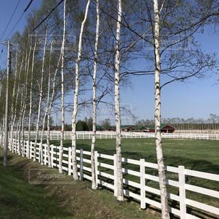 牧場と白樺の木の写真・画像素材[2120764]