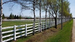 牧場と白樺の木の写真・画像素材[2223077]