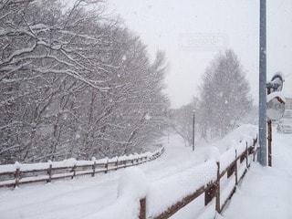 雪の写真・画像素材[41857]