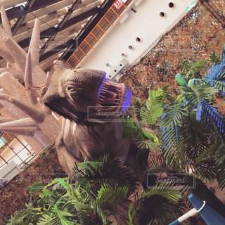 ヤシの木の群しの写真・画像素材[2295863]