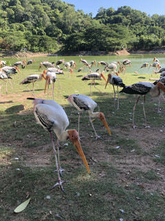 渡り鳥の写真・画像素材[2321111]