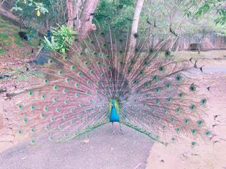 青い傘を持った鳥の写真・画像素材[2297431]