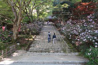 奈良県の写真・画像素材[487209]