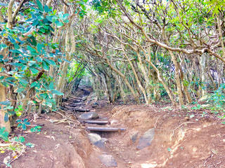ジブリに出てきそうな森の写真・画像素材[2301301]