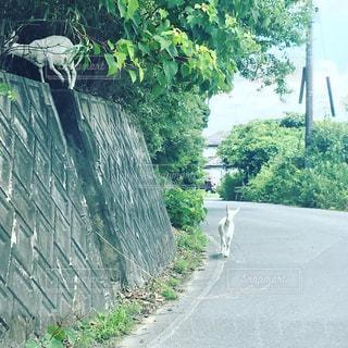道路の脇の木とヤギの写真・画像素材[2300523]