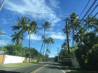 ハワイのドライブロードの写真・画像素材[2320905]