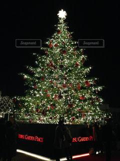 クリスマスツリーの写真・画像素材[2320927]