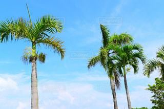 ヤシの木のあるビーチの写真・画像素材[2302689]