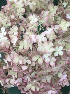 花の写真・画像素材[575424]