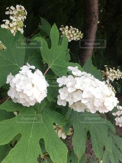 花の写真・画像素材[575428]
