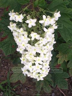 花の写真・画像素材[575429]