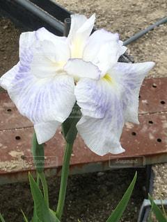 花の写真・画像素材[575430]