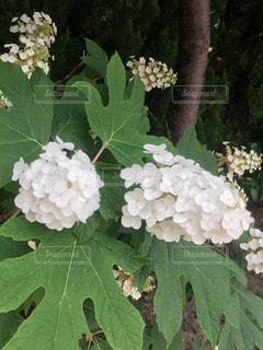 花の写真・画像素材[575431]