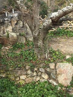 浜松城にて2の写真・画像素材[1732175]
