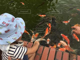 鯉に餌を与える子供の写真・画像素材[2414345]