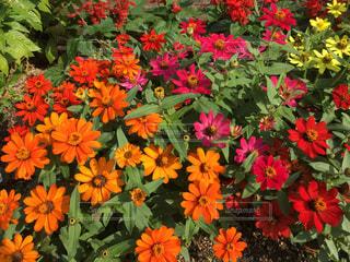 花の写真・画像素材[2678784]