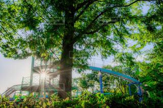 森の眺めの写真・画像素材[2340820]