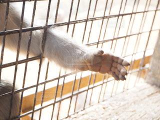 餌を欲しがるサルの写真・画像素材[2884689]