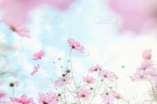 やわらかな花畑の中で🌸の写真・画像素材[3225000]