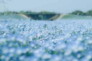 ピュアな白と青に包まれて♡の写真・画像素材[3228130]