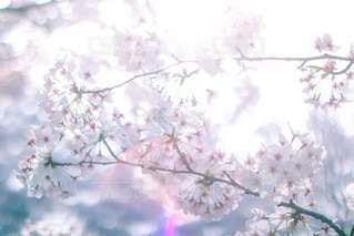 春の光お散歩🌸♡の写真・画像素材[3236963]