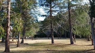 森の木の写真・画像素材[2309945]
