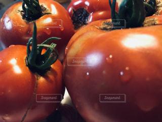 採れたてトマトの写真・画像素材[2307083]