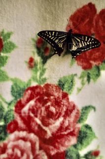 蝶の写真・画像素材[2314905]