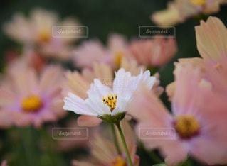 自然の写真・画像素材[116890]