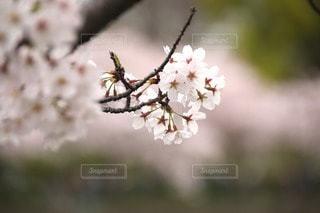 自然の写真・画像素材[116917]
