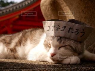 猫の写真・画像素材[129523]