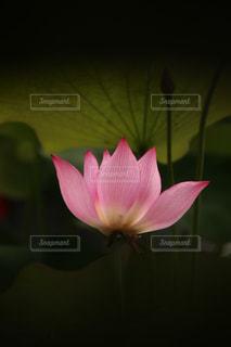 花の写真・画像素材[143264]