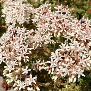 小花のクローズアップの写真・画像素材[2308856]
