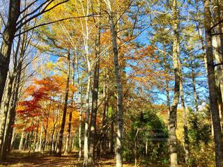 紅葉した木々の美しい景色の写真・画像素材[2309004]