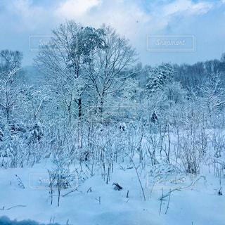 積雪後の景色の写真・画像素材[2310826]