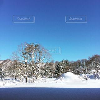 林に積もった雪の風景の写真・画像素材[2313003]