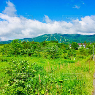 夏のある日の大日岳の写真・画像素材[2319031]