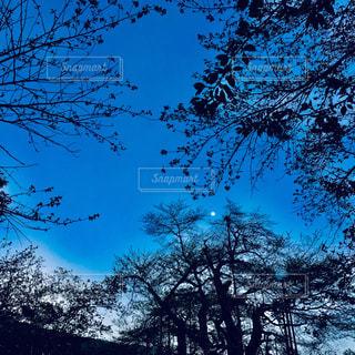 夜の始まりの写真・画像素材[2319425]
