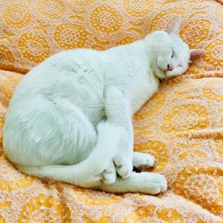 ベッドに横たわる猫の写真・画像素材[2389307]