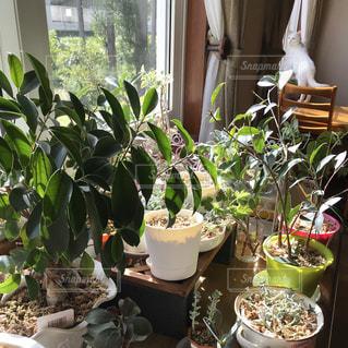 植物と猫の写真・画像素材[2480874]