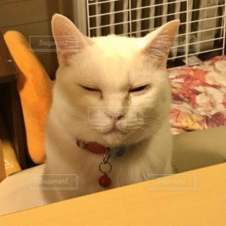 座っている猫の写真・画像素材[3129081]